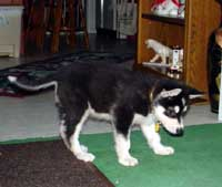 Sebastian July 12, 2004