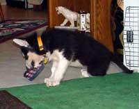 Sebastian July 16, 2004